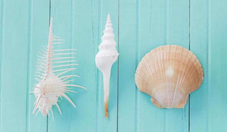 pulir conchas marinas